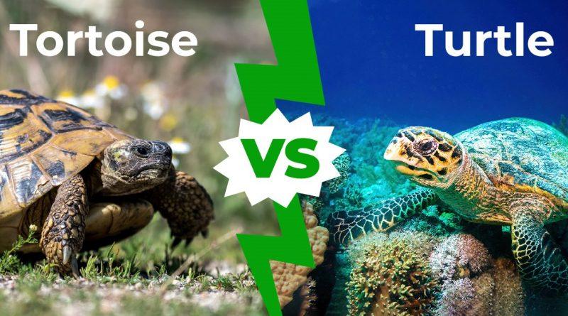 Tortuga vs Tortuga: Explicación de las 10 diferencias más importantes