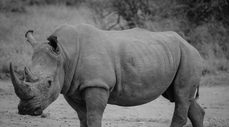 """Un """"suricato"""" solar protege a los rinocerontes de Kruger"""