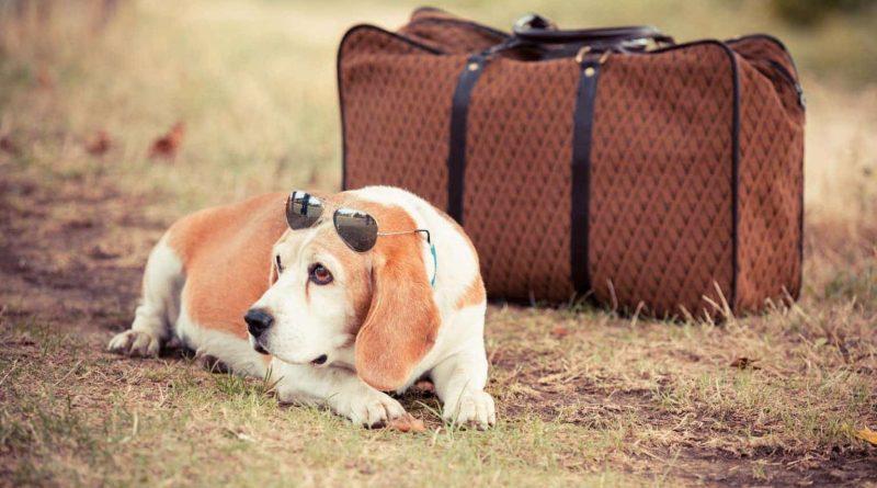 Viajar con tus mascotas