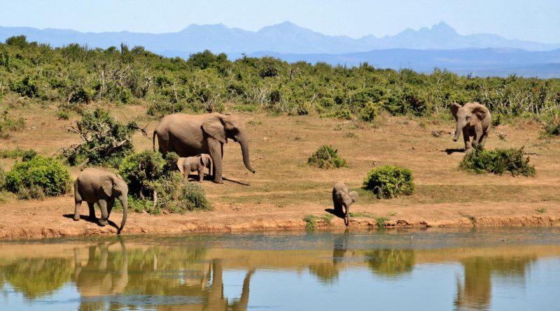 Vida salvaje y silencios |  Descubrimiento de Sudáfrica