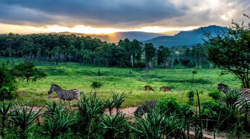 Vida silvestre en Swazilandia (parte 1)