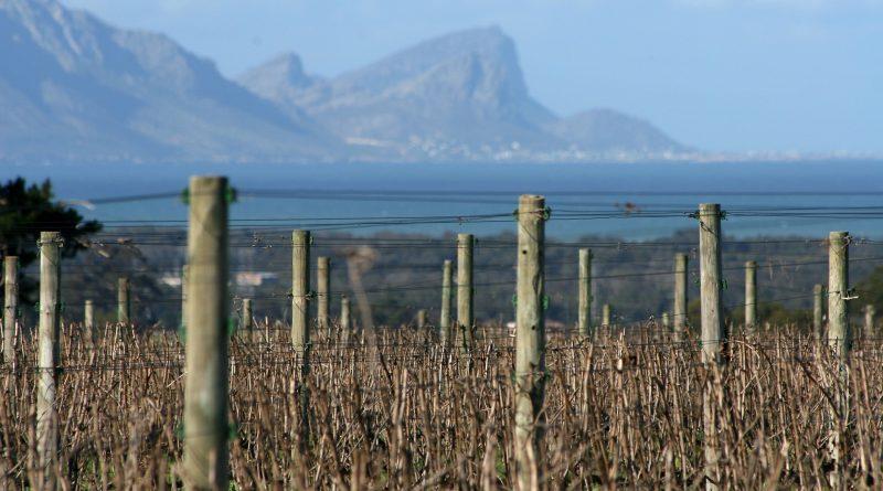 Viñedos Stellenbosch y Franschhoek