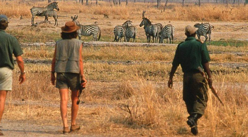 Walking Safari: caminar en medio de la naturaleza